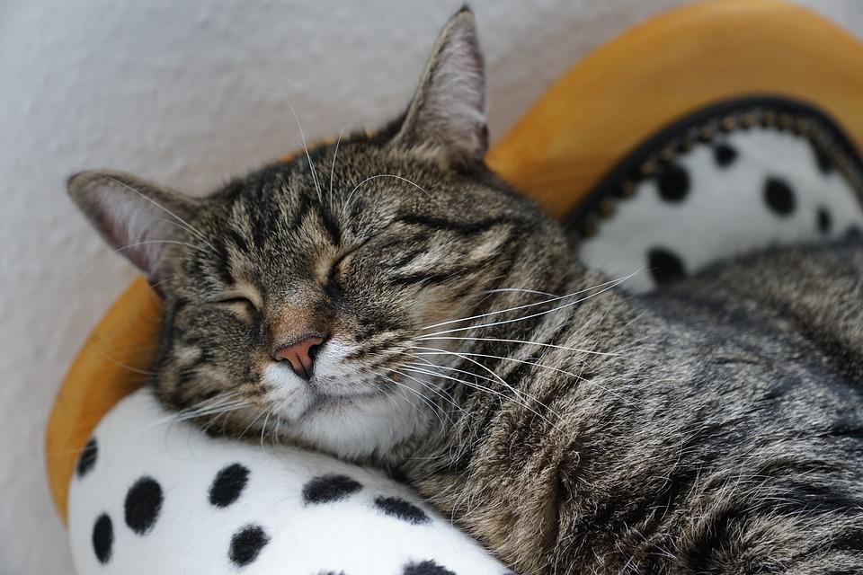 Los gatitos y los viajes